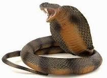 Hukum memelihara dan jual beli ular, tikus, buaya dan anjing