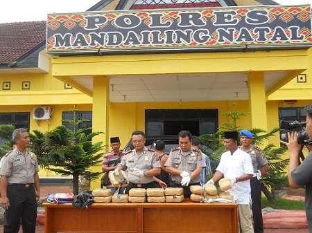 5 Orang Pengedar Ganja Antar Provinsi  Ditangkap Polres Madina