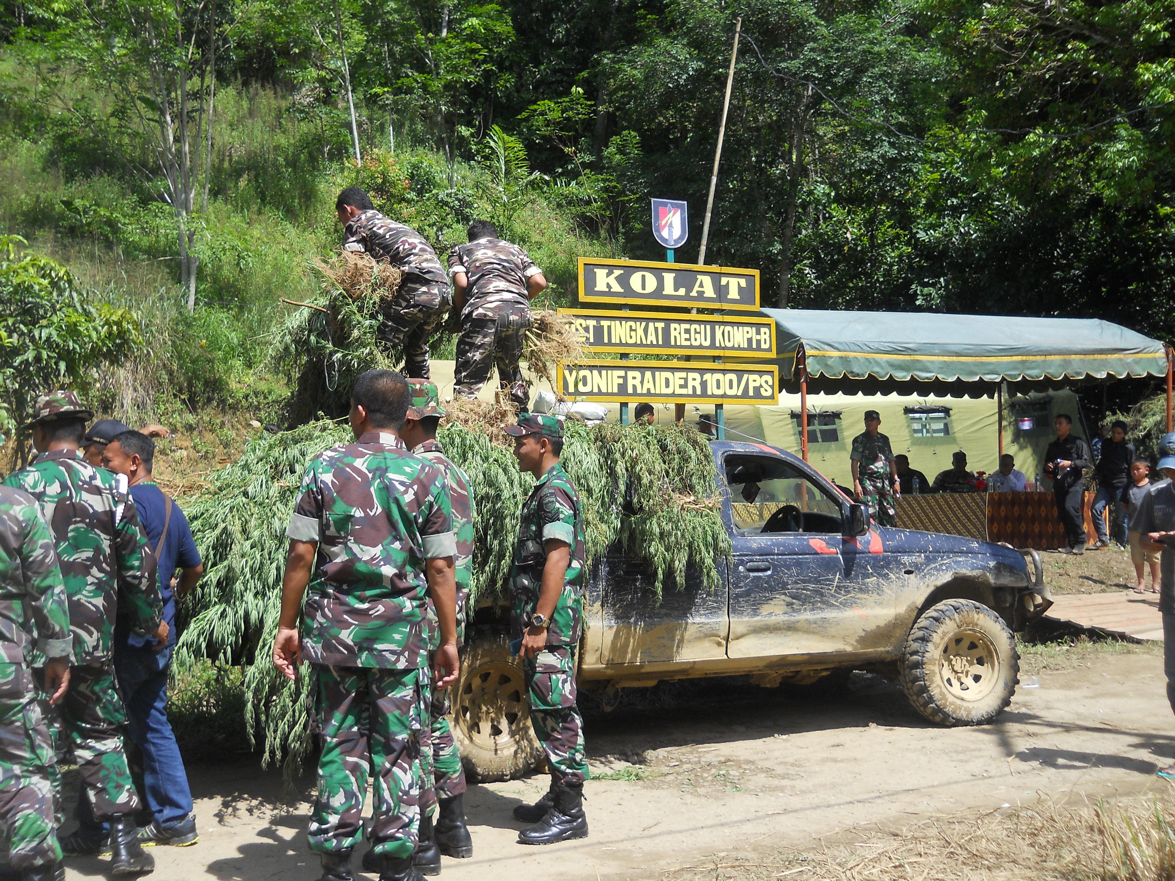 TNI Temukan 67,5 Ha Ladang Ganja di Panyabungan Timur.