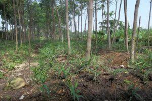 pemkab-madina-diharapkan-menyediakan-bibit-tanaman-tumpang-sari