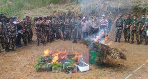 TNI Kembali Temukan 18 Ha Ladang Ganja dan 27 Pucuk Senjata Locot