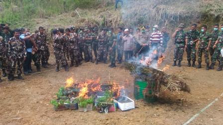pembakaran-ganja-di-desa-hutabangun