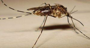 Kenapa Gigitan Nyamuk Terasa Gatal?