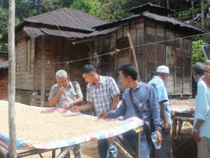 Jenis Kopi Luak dan penjemuaran untuk menghasilkan biji kopi siap jual. Panyabuangan, 1 Oktober 2016