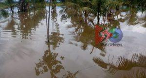 Areal Persawahan di Sekitar Sungai Batang Angkola Berubah Jadi Lautan Ribuan Hektar Padi Petani Gagal Panen
