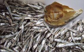 Cuaca Buruk, Harga Ikan Laut Naik
