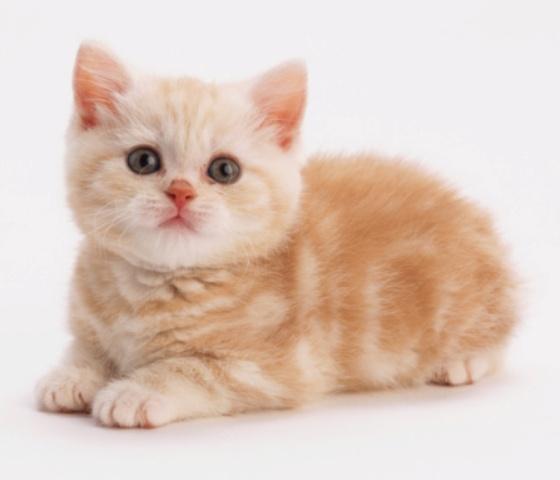 Ini Mengapa Sebabnya Kucing Jadi Binatang Kesayangan Nabi
