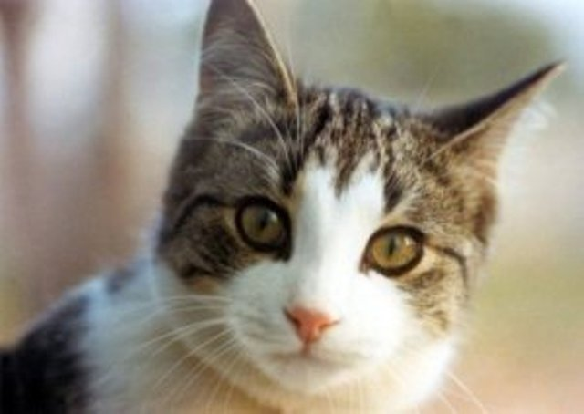 Fakta-Fakta Unik Tentang Kucing