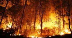 50 Hektar Hutan Terbakar di Balige