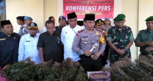 Satresnarkoba Polres Madina Tangkap Pemilik Ladang Ganja di Siobon