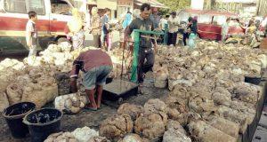 Musim Hujan Harga Getah Karet Bertahan di Level Rp7.400/kg