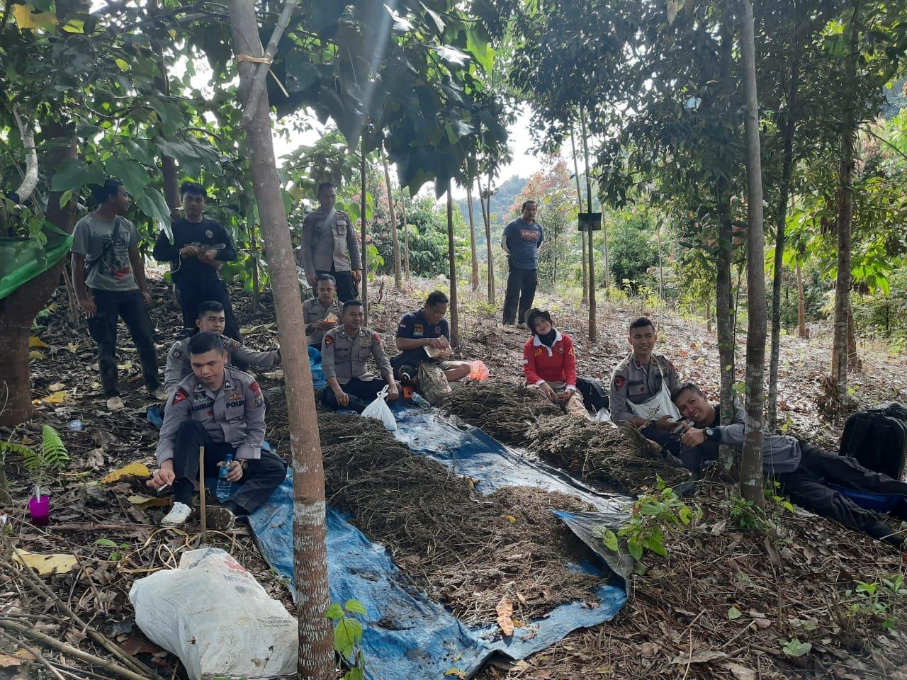 Lagi, Tujuh Hektare Ladang Ganja Dimusnahkan di Tor Sihite Madina