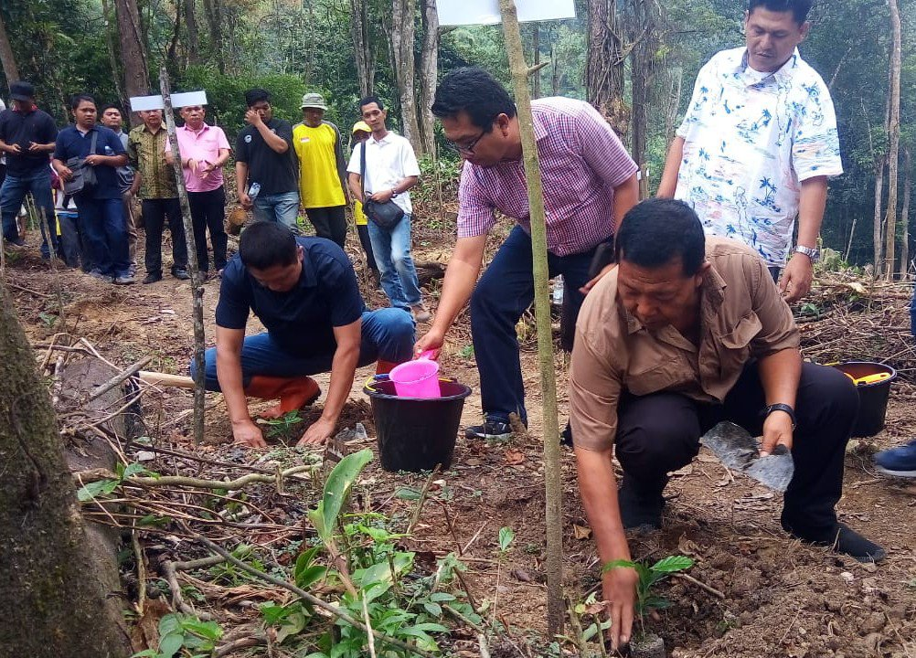 Bupati Madina Tanam perdana kopi di Lahan PT KRI Ulupungkut