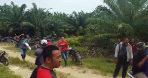 Penjarah Kebun Sawit Bebas Berkeliaran, Pengurus Koperasi Sawit Murni Minta Keadilan