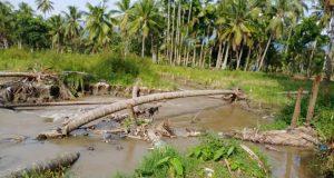 Tanggul Jebol, Puluhan Hektare Sawah Rusak di Desa Panyabungan Jae