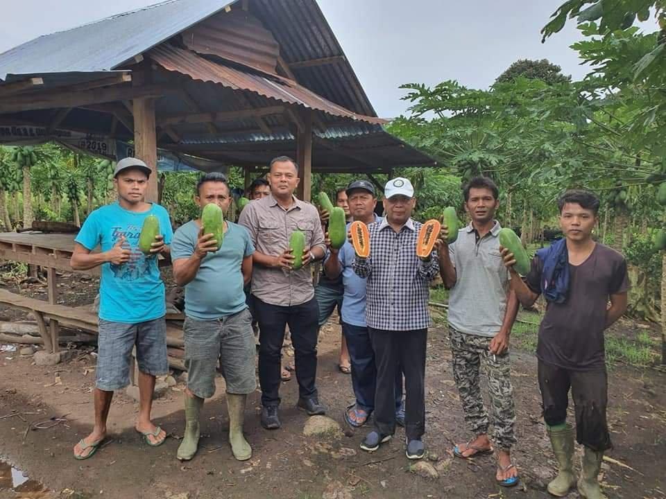 Desa Hortikultura di Runding Jadi Perhatian Provinsi Sumut