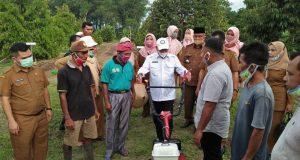 Tanam Perdana Bawang Merah, Pjs. Bupati Madina Serahkan Alsintan kepada Poktan Prima Jaya Runding
