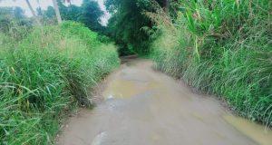 Semak Belukar Tumbuh Subur, Jalan Antar Desa Tangga Bosi Sempit juga Berlubang