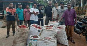 Poktan Aek Maga Binaan PT SMGP Panen Perdana Cabai Merah