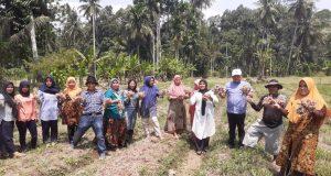 Poktan Melati Panen Bawang Merah, Hasilkan 13 Ton per Hektare
