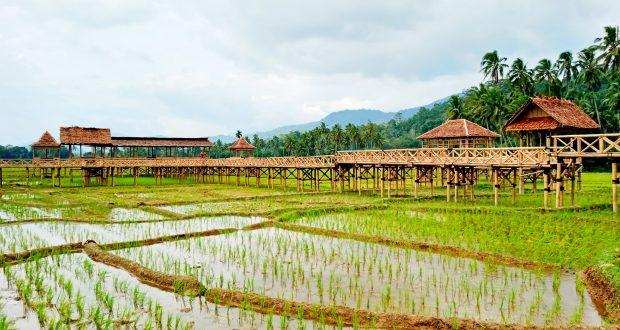 Komitmen Komisi DPRD Provsu untuk Wisata Sawah Sabarang